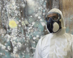 mold-inspector-removal-certification4