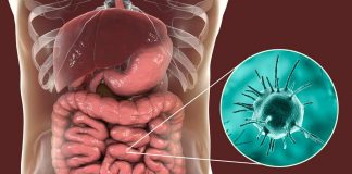 bacteria_virus_food_illness_safety
